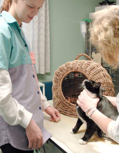 Die Tiergesundheits-Praxis Soujon